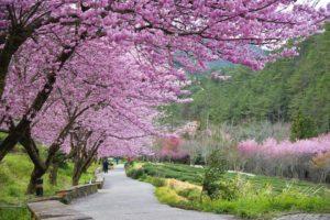 Mùa Xuân Đài Loan